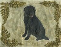 Black Dog Fine Art Print