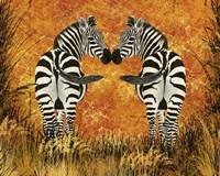 Zebras Fine Art Print