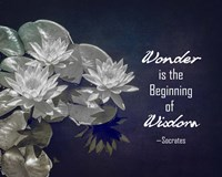 Wonder is the Beginning of Wisdom Water Lily Black and White Fine Art Print