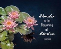 Wonder is the Beginning of Wisdom Water Lily Color Fine Art Print