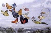 Fairy Butterflies 1 Fine Art Print