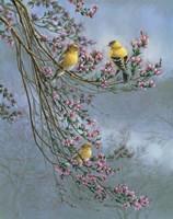 Gold Finches Fine Art Print