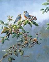 Bluebirds Fine Art Print
