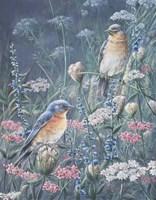 Bluebird And Wildflowers Fine Art Print