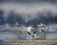Misty Flight Fine Art Print