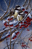 Winter Chickadees And Berries Fine Art Print