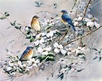 Dogwood Blues Fine Art Print