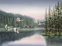 Swans At Sunrise Fine Art Print