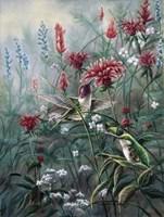 Monardia Fine Art Print