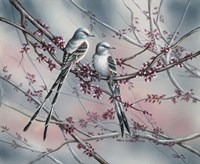 Spring Scissortail Fine Art Print