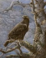 Mountain Majesty Fine Art Print