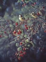 Red Raspberries And Chickadees Fine Art Print