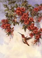 Hummingbird E Fine Art Print