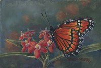 Monarch Fine Art Print