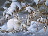 Winter Hares Fine Art Print