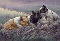 Three Little Pigs Fine Art Print