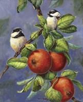 Chickadees And Apples Fine Art Print