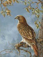 Retail Hawk Fine Art Print