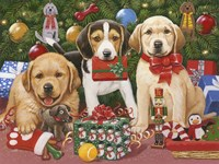 Which One's Mine - Xmas Puppies Fine Art Print