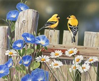 Morning Glories and Finches Fine Art Print