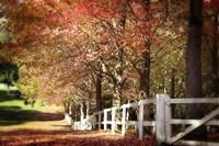 Autumn Moods Fine Art Print