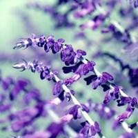 BC Pretty In Purple Fine Art Print