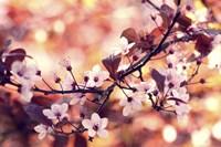 Colours Of Springtime Fine Art Print