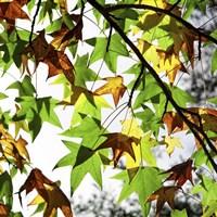 First Signs Of Autumn Fine Art Print