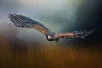 Flight Of The Harris Hawk Fine Art Print