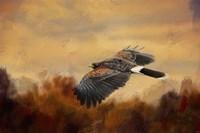 Harris Hawk In Autumn Fine Art Print