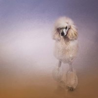 On The Way To The Salon Standard Poodle Fine Art Print