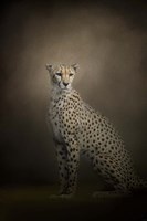 The Elegant Cheetah Fine Art Print