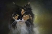 Calico Stare Fine Art Print