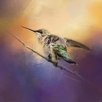 Hummingbird At Sunset Fine Art Print