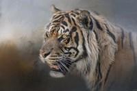Alert Bengal Fine Art Print