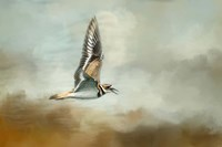 Flight Of The Killdeer Fine Art Print