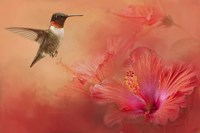 Hummingbird and Peach Hibiscus Fine Art Print
