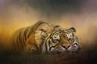 The Tiger Awakens Fine Art Print