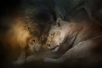 Lion Love Fine Art Print