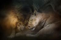 Lion Love Fine Art Print
