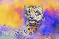 Colorful Expressions Snow Leopard Fine Art Print