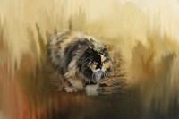 Stalking Autumn Fine Art Print