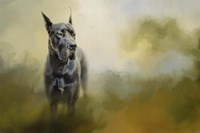 Wistful Dane Fine Art Print