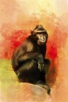 Colorful Expressions Black Monkey Fine Art Print