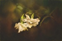 Gardenia In The Garden Fine Art Print