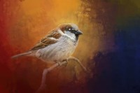 Autumn Sparrow Fine Art Print