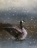 Snowy Swim Fine Art Print