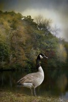The Canadian Goose Fine Art Print