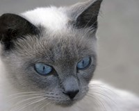 Blue Eyes Fine Art Print