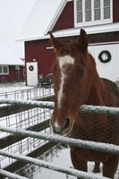 Horse in Winter Fine Art Print